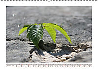 Mauerblümchen - Raus aus dem Schatten und rein in das Rampenlicht (Wandkalender 2019 DIN A2 quer) - Produktdetailbild 10