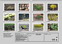 Mauerblümchen - Raus aus dem Schatten und rein in das Rampenlicht (Wandkalender 2019 DIN A2 quer) - Produktdetailbild 13