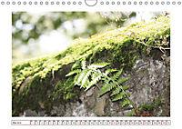 Mauerblümchen - Raus aus dem Schatten und rein in das Rampenlicht (Wandkalender 2019 DIN A4 quer) - Produktdetailbild 5