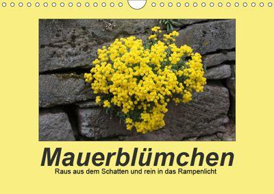 Mauerblümchen - Raus aus dem Schatten und rein in das Rampenlicht (Wandkalender 2019 DIN A4 quer), Angelika Keller