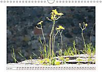 Mauerblümchen - Raus aus dem Schatten und rein in das Rampenlicht (Wandkalender 2019 DIN A4 quer) - Produktdetailbild 6