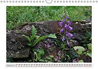 Mauerblümchen - Raus aus dem Schatten und rein in das Rampenlicht (Wandkalender 2019 DIN A4 quer) - Produktdetailbild 9