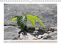 Mauerblümchen - Raus aus dem Schatten und rein in das Rampenlicht (Wandkalender 2019 DIN A4 quer) - Produktdetailbild 10