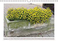 Mauerblümchen - Raus aus dem Schatten und rein in das Rampenlicht (Wandkalender 2019 DIN A4 quer) - Produktdetailbild 11