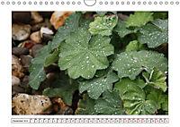 Mauerblümchen - Raus aus dem Schatten und rein in das Rampenlicht (Wandkalender 2019 DIN A4 quer) - Produktdetailbild 12