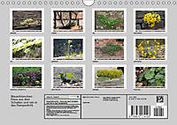 Mauerblümchen - Raus aus dem Schatten und rein in das Rampenlicht (Wandkalender 2019 DIN A4 quer) - Produktdetailbild 13