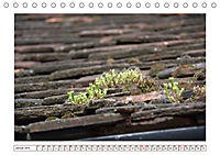 Mauerblümchen - Raus aus dem Schatten und rein in das Rampenlicht (Tischkalender 2019 DIN A5 quer) - Produktdetailbild 1