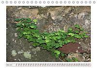 Mauerblümchen - Raus aus dem Schatten und rein in das Rampenlicht (Tischkalender 2019 DIN A5 quer) - Produktdetailbild 3