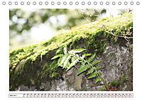 Mauerblümchen - Raus aus dem Schatten und rein in das Rampenlicht (Tischkalender 2019 DIN A5 quer) - Produktdetailbild 5