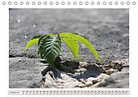 Mauerblümchen - Raus aus dem Schatten und rein in das Rampenlicht (Tischkalender 2019 DIN A5 quer) - Produktdetailbild 10