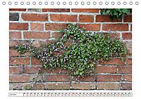 Mauerblümchen - Raus aus dem Schatten und rein in das Rampenlicht (Tischkalender 2019 DIN A5 quer) - Produktdetailbild 7