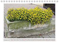 Mauerblümchen - Raus aus dem Schatten und rein in das Rampenlicht (Tischkalender 2019 DIN A5 quer) - Produktdetailbild 11