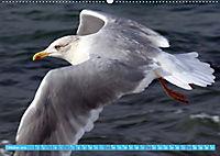 Mecklenburger Kapitänshühner (Wandkalender 2019 DIN A2 quer) - Produktdetailbild 10