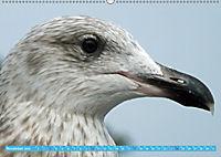 Mecklenburger Kapitänshühner (Wandkalender 2019 DIN A2 quer) - Produktdetailbild 11
