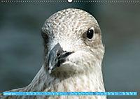 Mecklenburger Kapitänshühner (Wandkalender 2019 DIN A2 quer) - Produktdetailbild 1