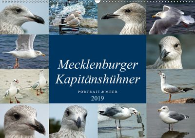 Mecklenburger Kapitänshühner (Wandkalender 2019 DIN A2 quer), Holger Felix