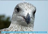 Mecklenburger Kapitänshühner (Wandkalender 2019 DIN A2 quer) - Produktdetailbild 3