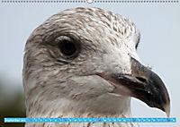 Mecklenburger Kapitänshühner (Wandkalender 2019 DIN A2 quer) - Produktdetailbild 9