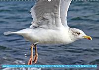 Mecklenburger Kapitänshühner (Wandkalender 2019 DIN A2 quer) - Produktdetailbild 4