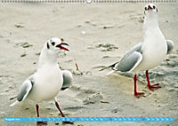 Mecklenburger Kapitänshühner (Wandkalender 2019 DIN A2 quer) - Produktdetailbild 8