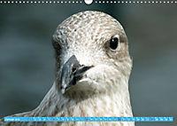 Mecklenburger Kapitänshühner (Wandkalender 2019 DIN A3 quer) - Produktdetailbild 1