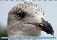 Mecklenburger Kapitänshühner (Wandkalender 2019 DIN A3 quer) - Produktdetailbild 9