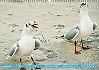 Mecklenburger Kapitänshühner (Wandkalender 2019 DIN A3 quer) - Produktdetailbild 8
