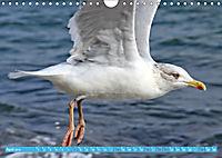 Mecklenburger Kapitänshühner (Wandkalender 2019 DIN A4 quer) - Produktdetailbild 4