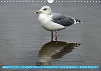 Mecklenburger Kapitänshühner (Wandkalender 2019 DIN A4 quer) - Produktdetailbild 6