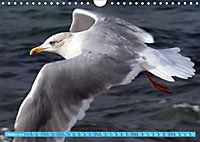 Mecklenburger Kapitänshühner (Wandkalender 2019 DIN A4 quer) - Produktdetailbild 10