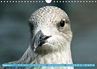 Mecklenburger Kapitänshühner (Wandkalender 2019 DIN A4 quer) - Produktdetailbild 1