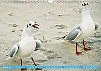 Mecklenburger Kapitänshühner (Wandkalender 2019 DIN A4 quer) - Produktdetailbild 8