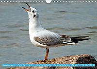 Mecklenburger Kapitänshühner (Wandkalender 2019 DIN A4 quer) - Produktdetailbild 12