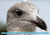 Mecklenburger Kapitänshühner (Wandkalender 2019 DIN A4 quer) - Produktdetailbild 9