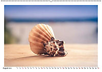 Meer Träumer - Muscheln und Schnecken Impressionen (Wandkalender 2019 DIN A2 quer) - Produktdetailbild 2