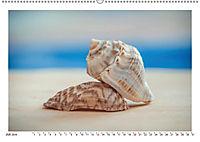 Meer Träumer - Muscheln und Schnecken Impressionen (Wandkalender 2019 DIN A2 quer) - Produktdetailbild 12