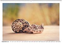 Meer Träumer - Muscheln und Schnecken Impressionen (Wandkalender 2019 DIN A2 quer) - Produktdetailbild 8