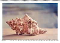 Meer Träumer - Muscheln und Schnecken Impressionen (Wandkalender 2019 DIN A2 quer) - Produktdetailbild 9