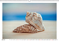 Meer Träumer - Muscheln und Schnecken Impressionen (Wandkalender 2019 DIN A3 quer) - Produktdetailbild 7