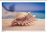 Meer Träumer - Muscheln und Schnecken Impressionen (Wandkalender 2019 DIN A3 quer) - Produktdetailbild 2