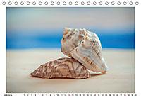 Meer Träumer - Muscheln und Schnecken Impressionen (Tischkalender 2019 DIN A5 quer) - Produktdetailbild 7
