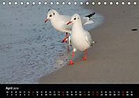 Meergefühl (Tischkalender 2019 DIN A5 quer) - Produktdetailbild 4