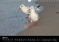 Meergefühl (Wandkalender 2019 DIN A4 quer) - Produktdetailbild 4