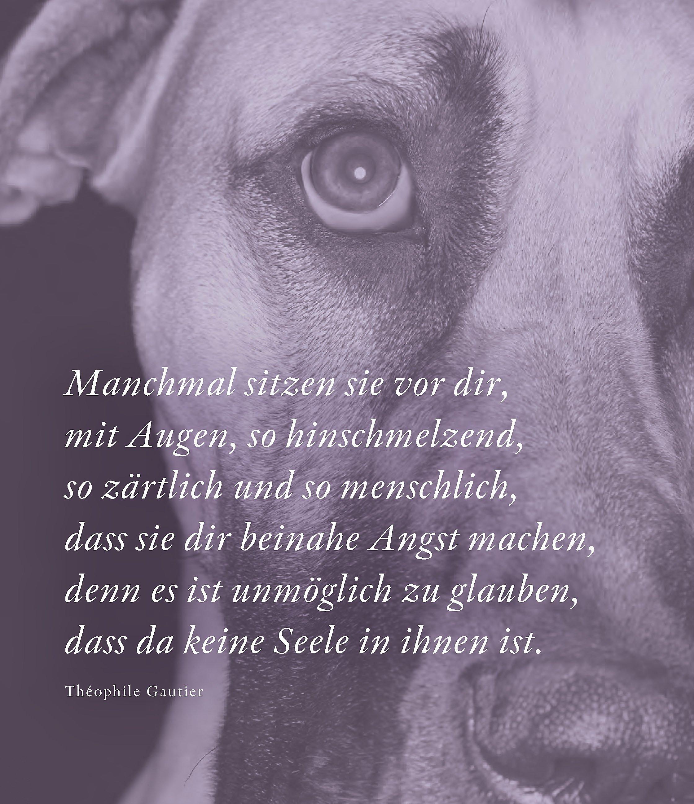 Mehr als nur ein Hund Buch von Anne Seven
