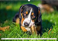 Mein bester Freund - Entlebucher Sennenhund (Wandkalender 2019 DIN A3 quer) - Produktdetailbild 6