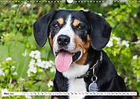 Mein bester Freund - Entlebucher Sennenhund (Wandkalender 2019 DIN A3 quer) - Produktdetailbild 3