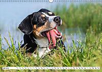 Mein bester Freund - Entlebucher Sennenhund (Wandkalender 2019 DIN A3 quer) - Produktdetailbild 7