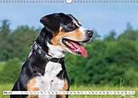 Mein bester Freund - Entlebucher Sennenhund (Wandkalender 2019 DIN A3 quer) - Produktdetailbild 5
