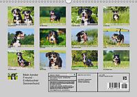 Mein bester Freund - Entlebucher Sennenhund (Wandkalender 2019 DIN A3 quer) - Produktdetailbild 13