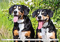 Mein bester Freund - Entlebucher Sennenhund (Wandkalender 2019 DIN A4 quer) - Produktdetailbild 1
